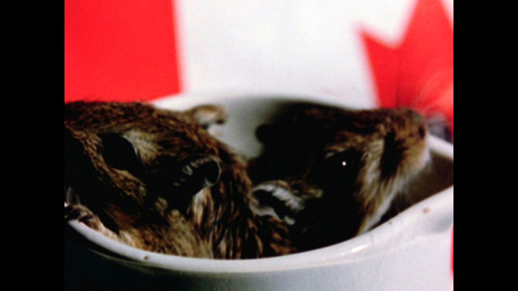 Rat Life and Diet in North America | Canadian Filmmakers